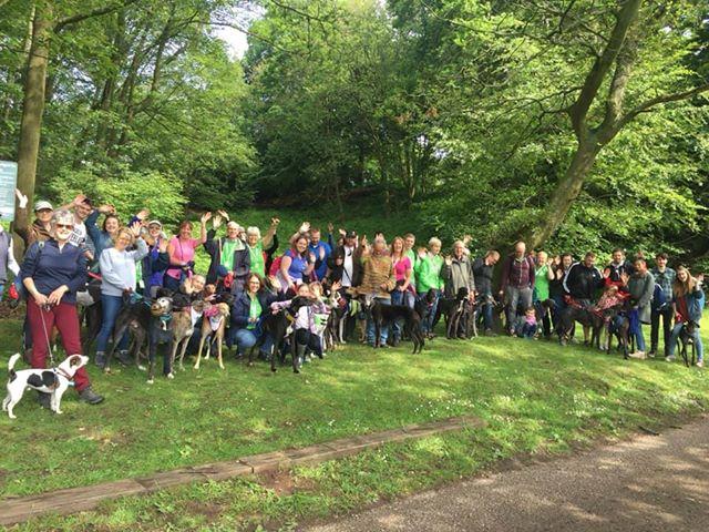 Dog Show Great Global Greyhound Walk June 2019