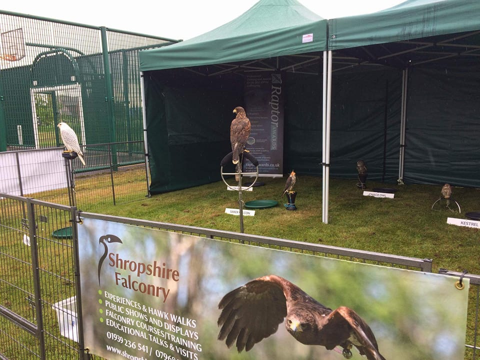 Shropshire Falconry in the Grand Valley